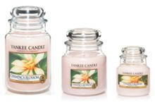 Yankee Candle Champaca Blossom Tea Lights