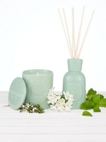 Wild Mint Fragrance range