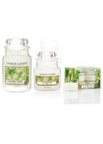 Yankee Candle Linden Tree Fragrance Range