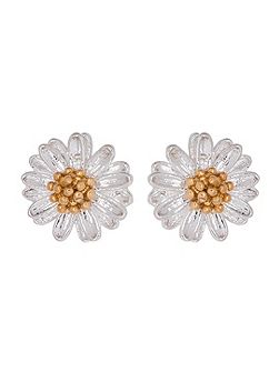 EB974C ladies earrings