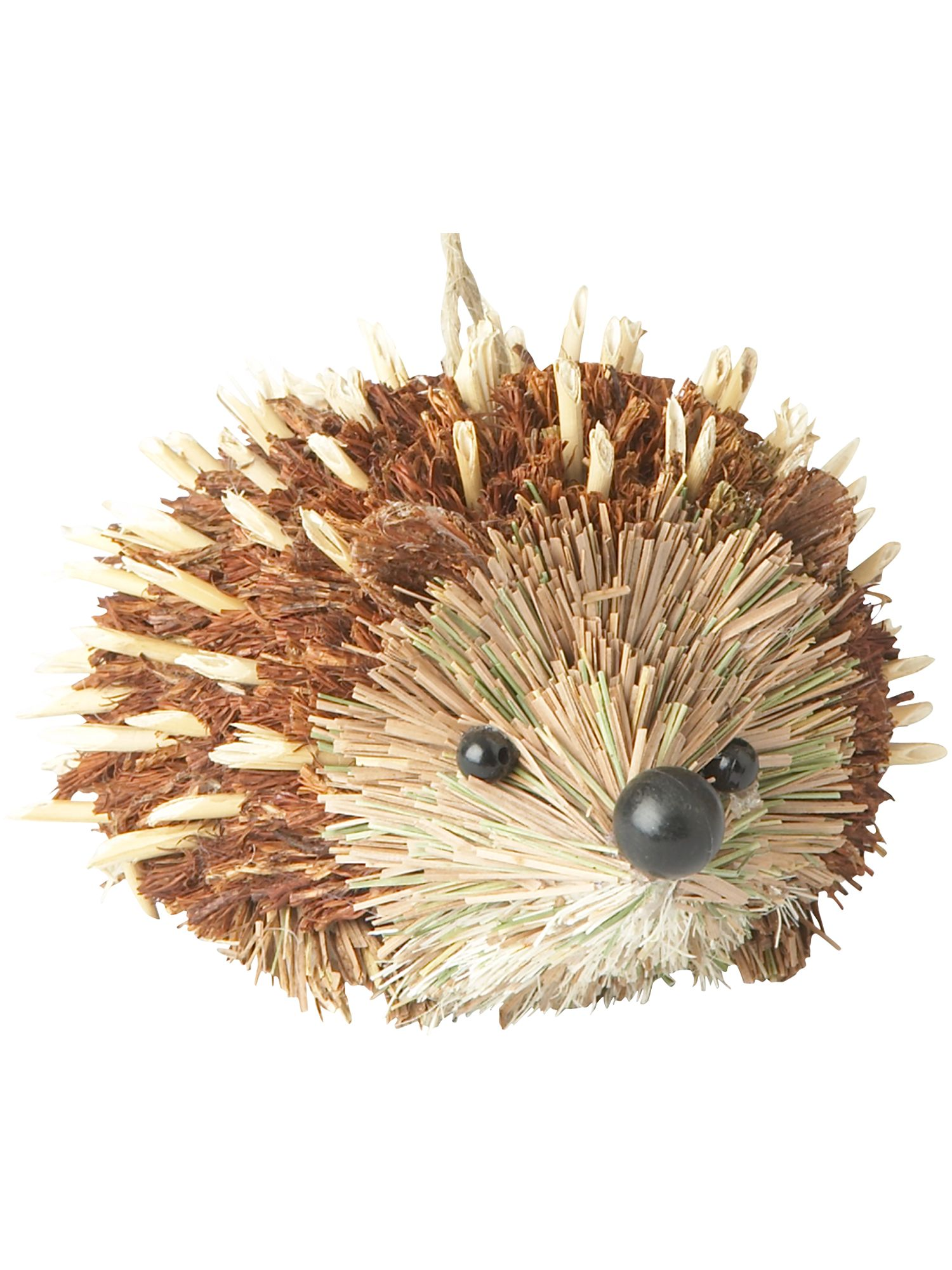 Nostalgia bristle hedgehog