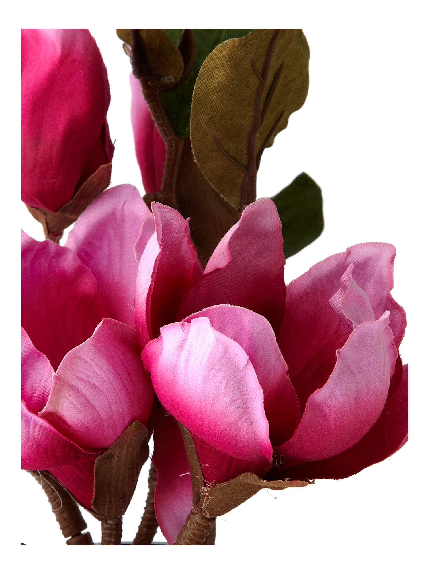 Pink magnolia in coloured vase