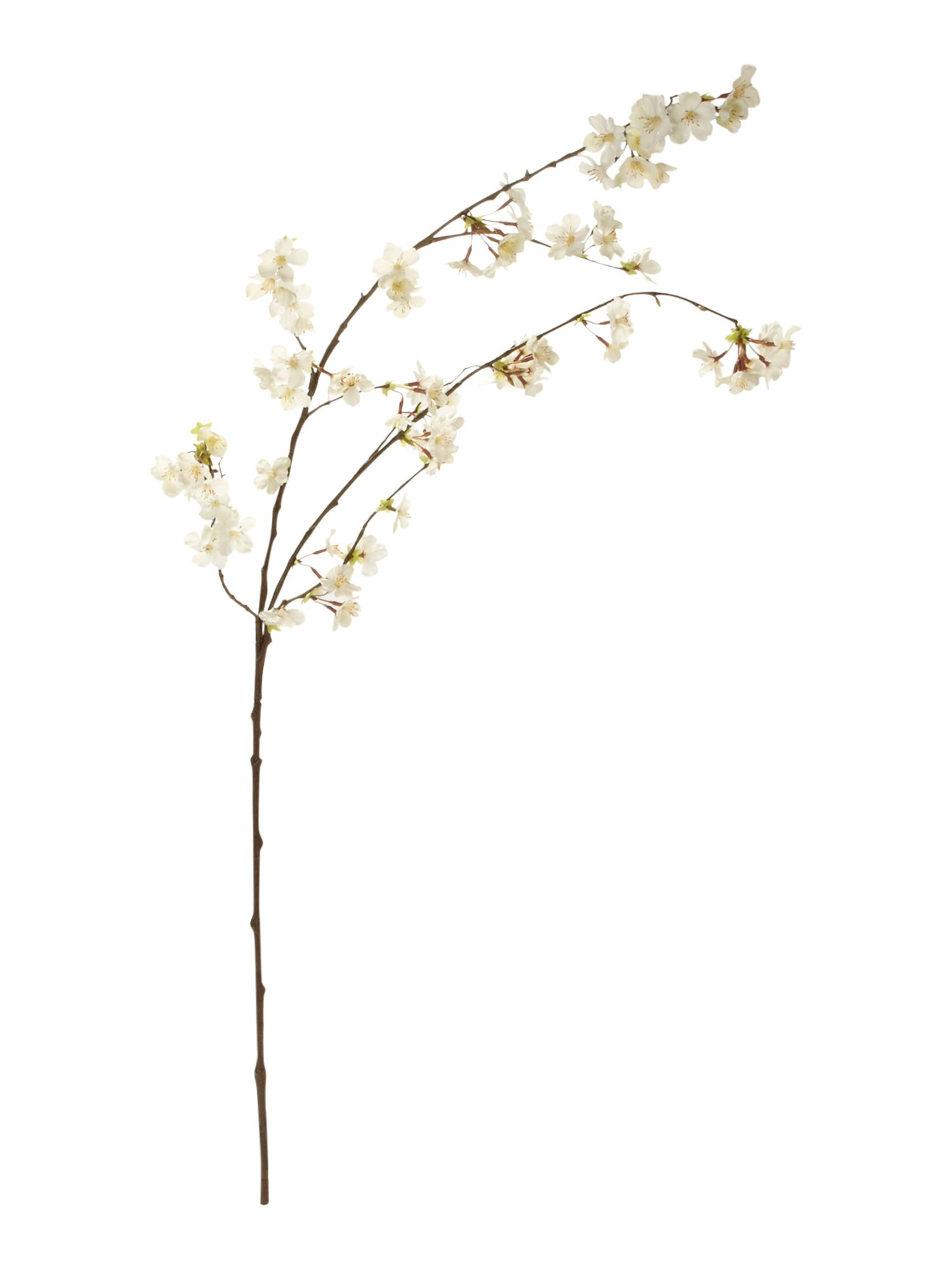 Linea Cherry blossom branch