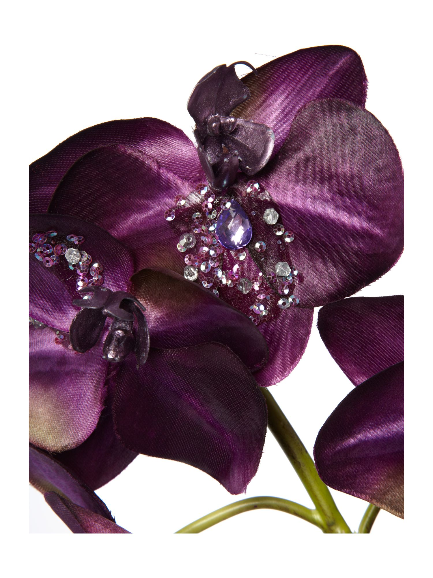 Purple glitter orchid