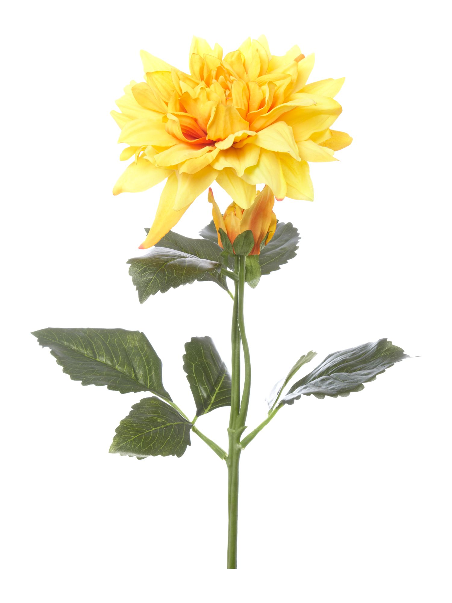 Yellow dahlia stem