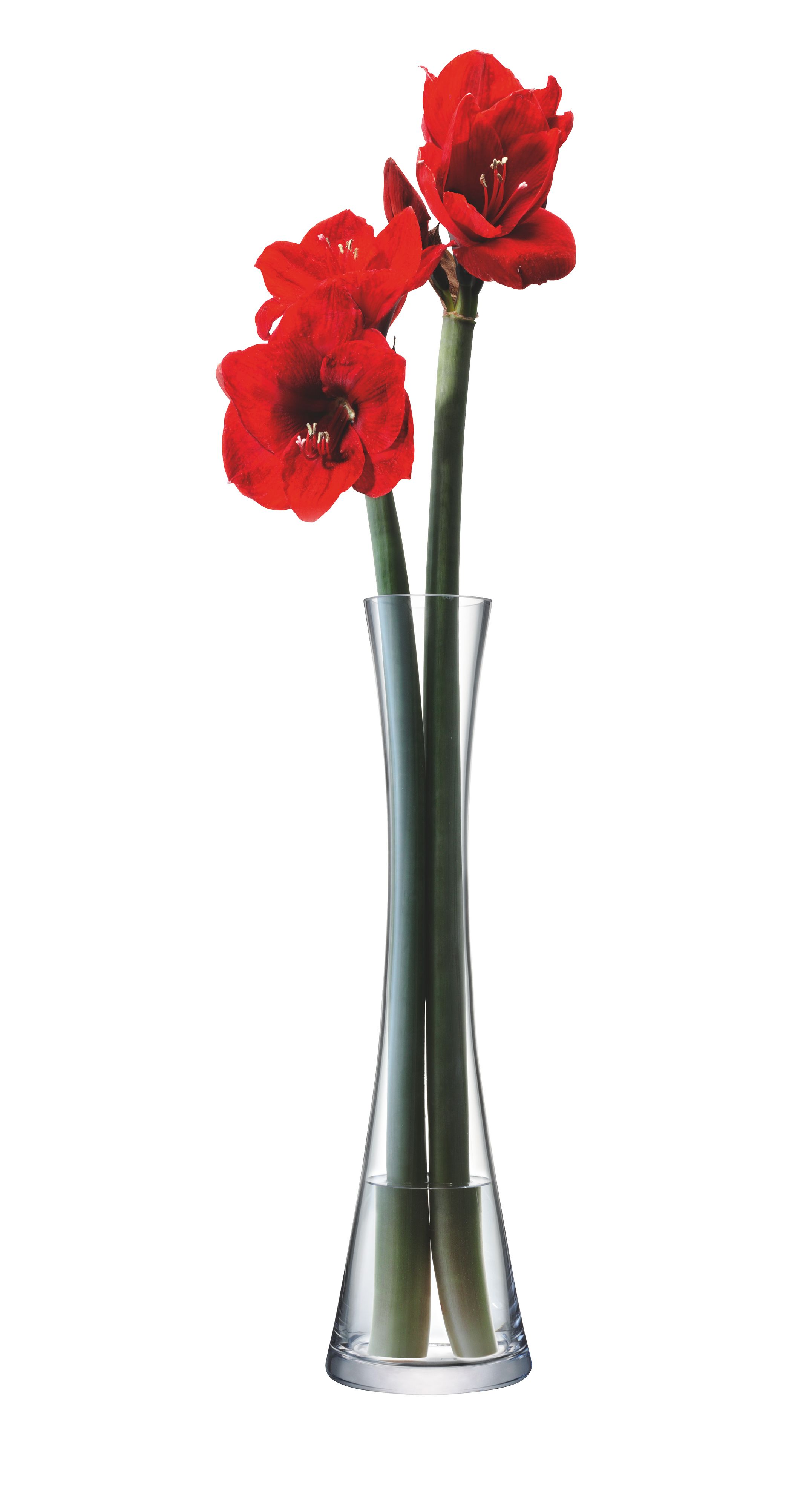 Tall single stem vase, clear, 50cm
