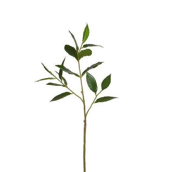 Laurel stem