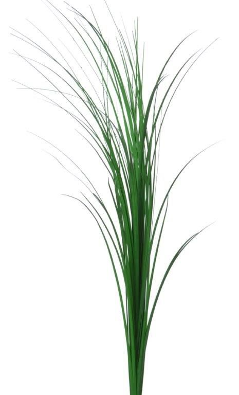 Green grass stem