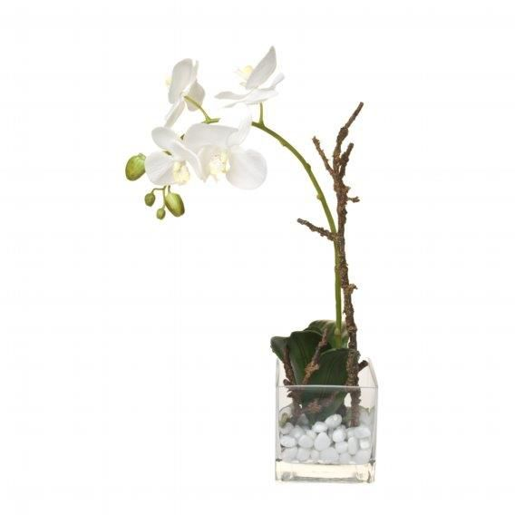 Water phalaenopsis with rocks