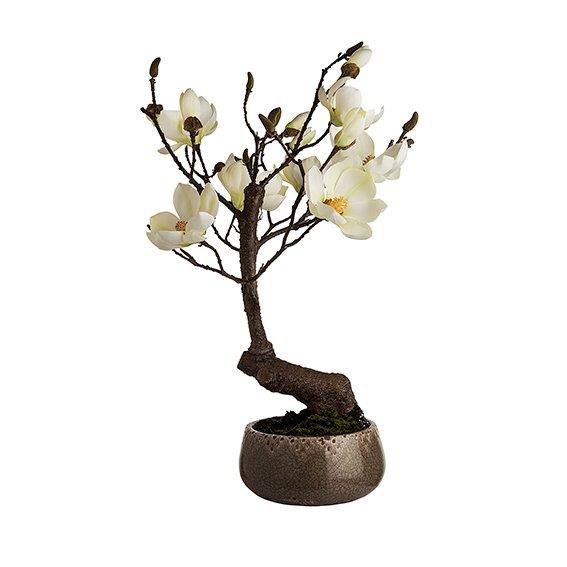 Magnolia in white crackle pot