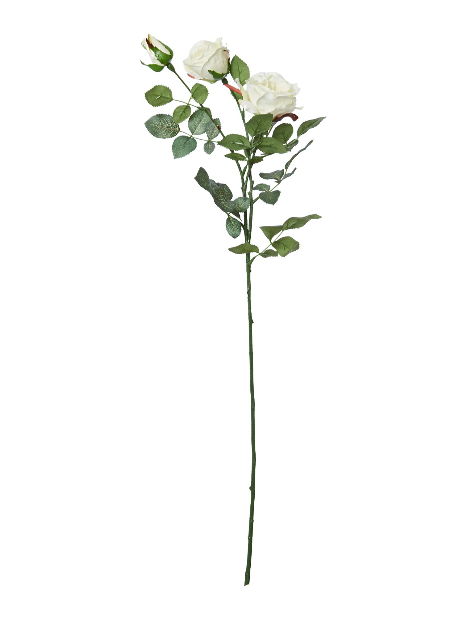 Linea Cream alice rose single stem