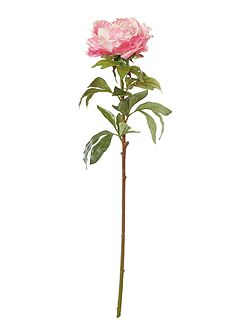 Pink king peony single stem