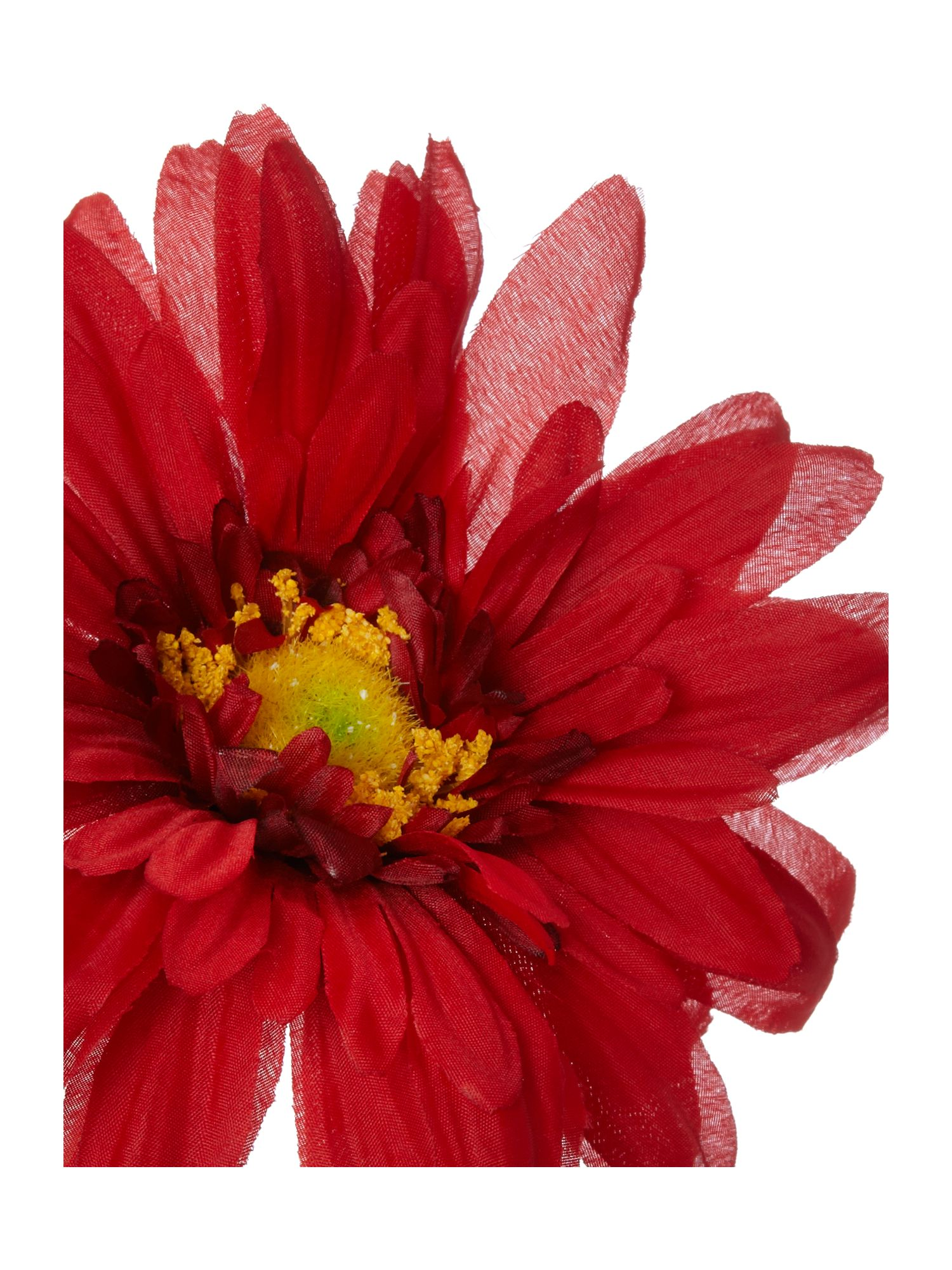 Red gerbera single stem
