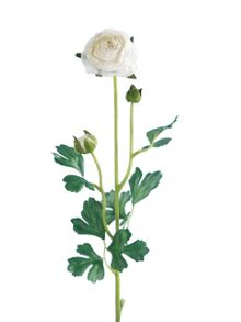 Linea White ranunculus spray