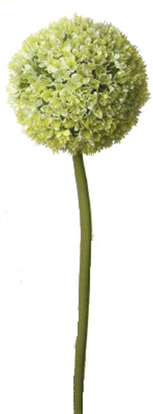 Green allium single stem