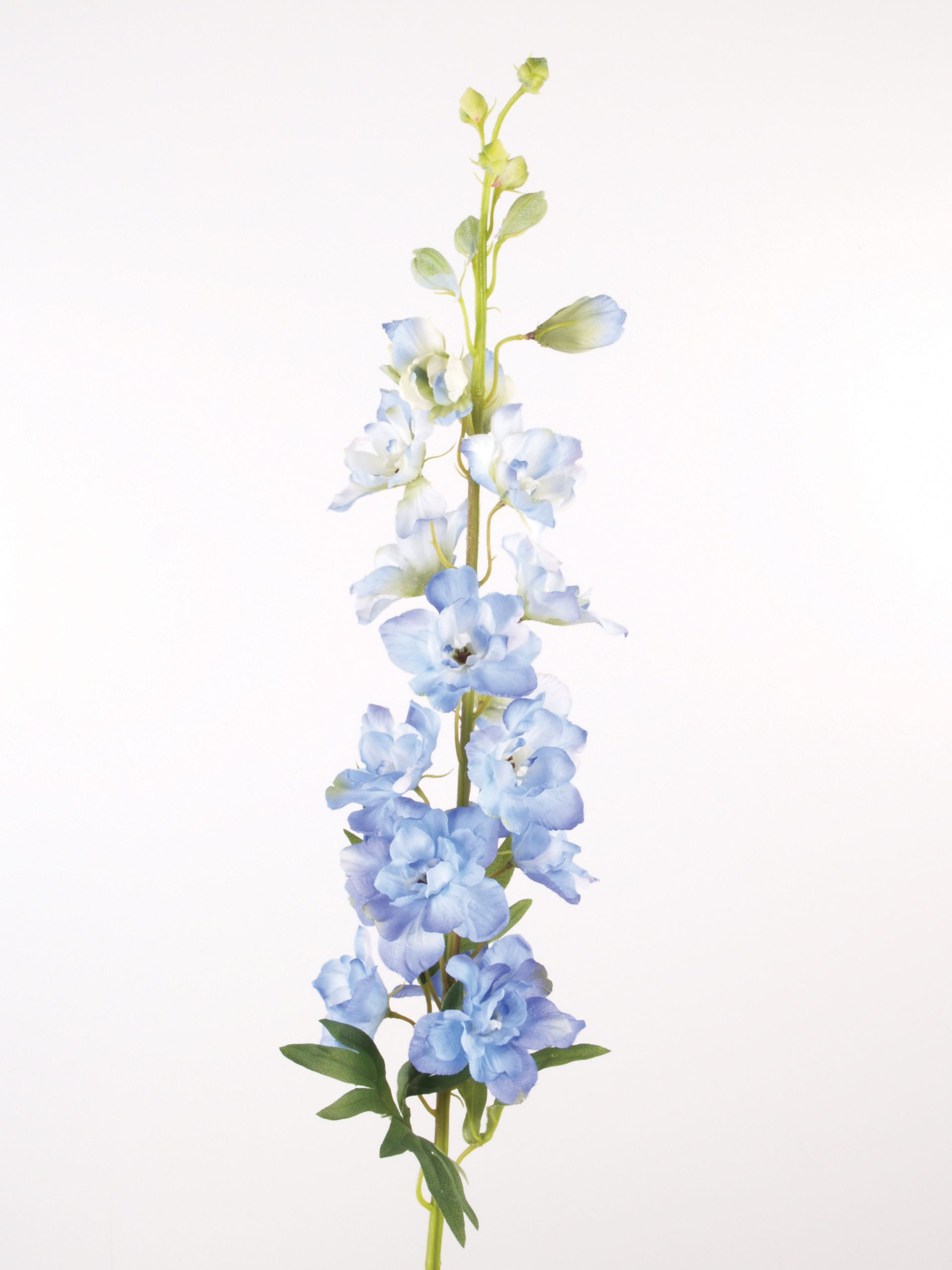 Blue delphinium spray