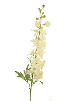White delphinium spray