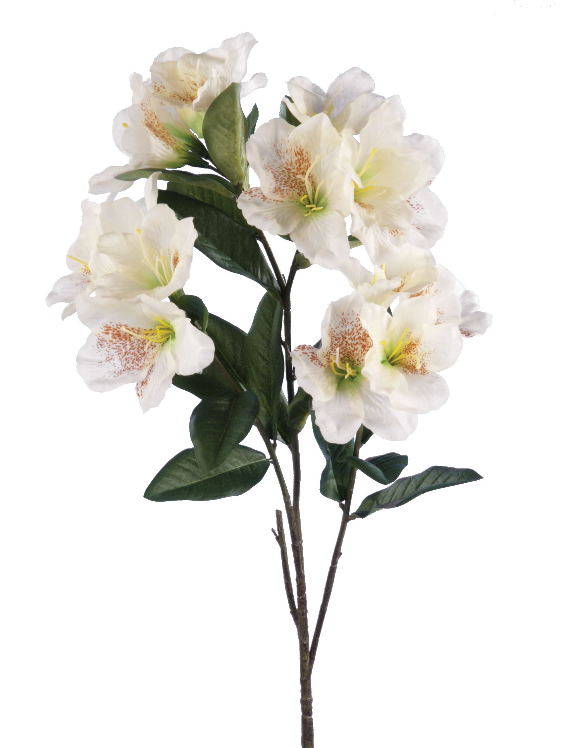 Linea Cream Rhododendron single stem