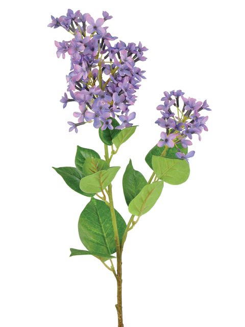 Purple lilac single stem
