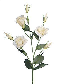 Cream lisianthus single stem