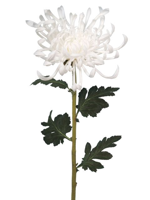 Linea Cream fuji mum single stem