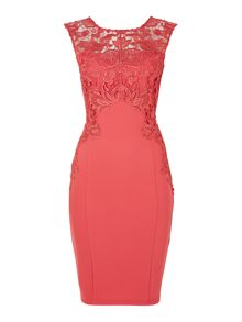 Lace capped sleeved bodycon dress