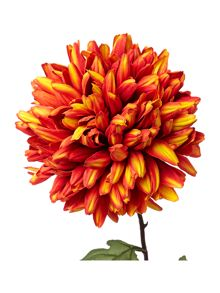Linea orange chrysanthemum