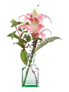 tiger lily in arcylic water - pink
