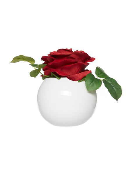 Linea Red rose in bowl