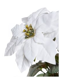 White Poinsettia arrangement