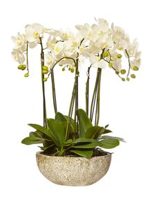 Large orchid arrangement in stone bowl