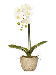 Small orchid arrangement in stone bowl