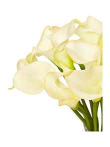 Linea Calla Lilly arrangement