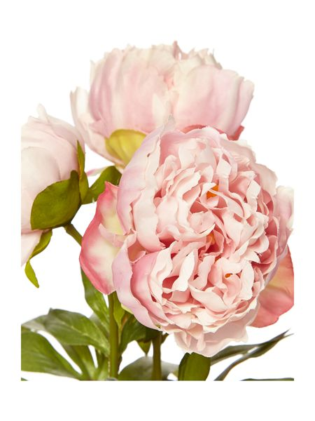 Linea Potted pale pink peony