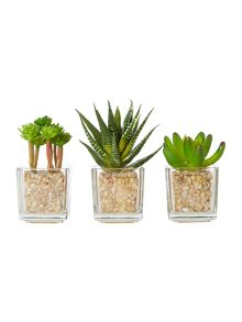 Linea Mini succulent set of three