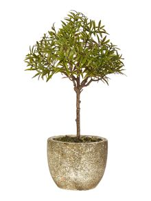 Linea Rosemary Tree