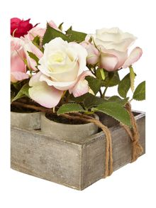 Dickins & Jones Tray of 6 mini roses