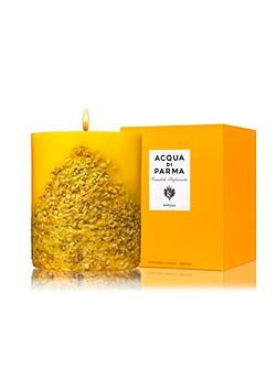 Mimosa Candle 900g
