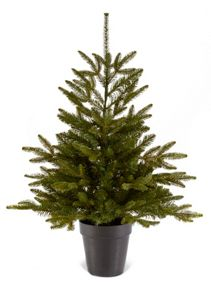 90cm natural pine tree