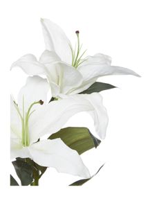 Casablanca Lilly - White