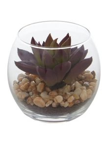 Linea Mini purple succulent