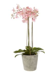 Linea 3 Stem Pink Orchid