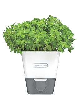 Self-Watering Potted Herb Keeper