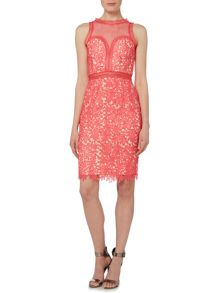 Little Mistress Sleeveless Lace With Mesh Top Bodycon Dress