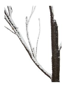 Linea 1.2m Snow dusted tree with dark bark