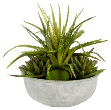 Junipa Spikey succulent in grey ceramic vase