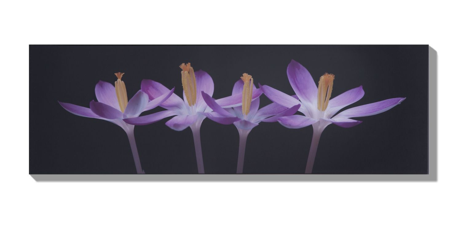 Crocus embrace wall art