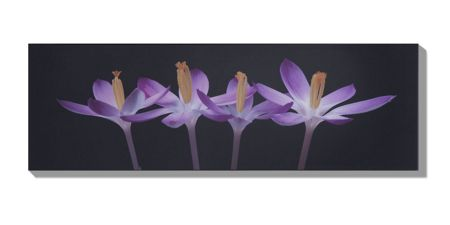 Graham & Brown Crocus embrace wall art