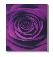 Graham & Brown Plum passion wall art