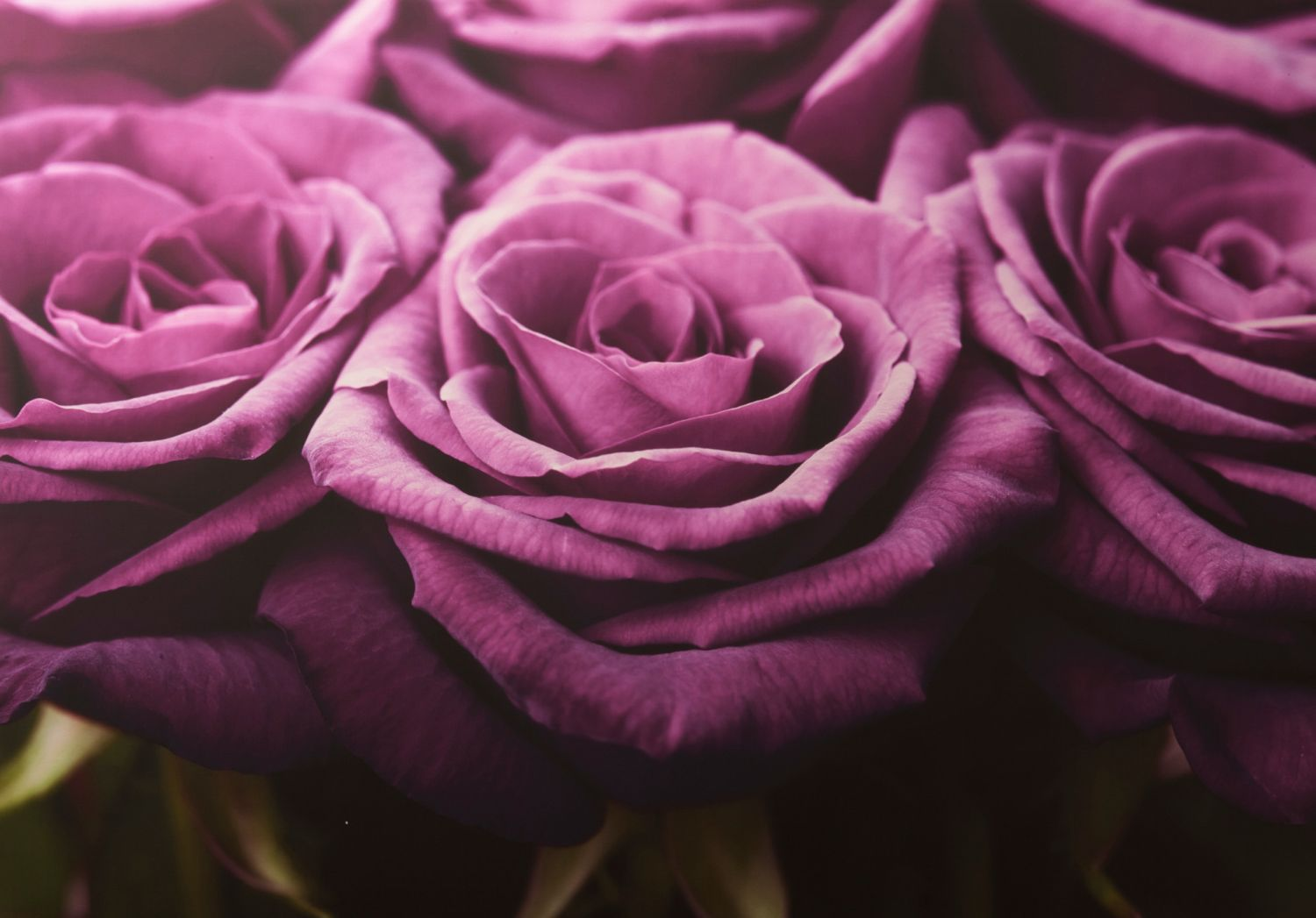 Plum roses row wall art